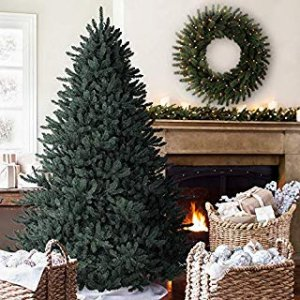blue spruce holiday tree
